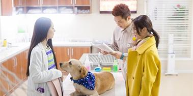 《神犬小七》: 演绎治愈系萌宠奇缘